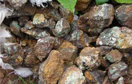 矿业权转让拍卖实施办法