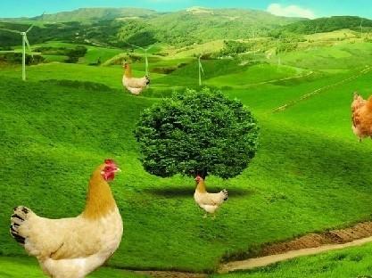 2012广东禽、畜委托养殖合同