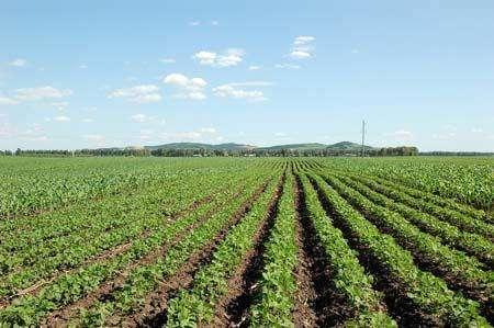 国有土地使用权的取得方式:出让、划拨是怎样规定的?
