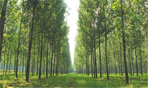 盗伐林木罪的构成要件有哪些