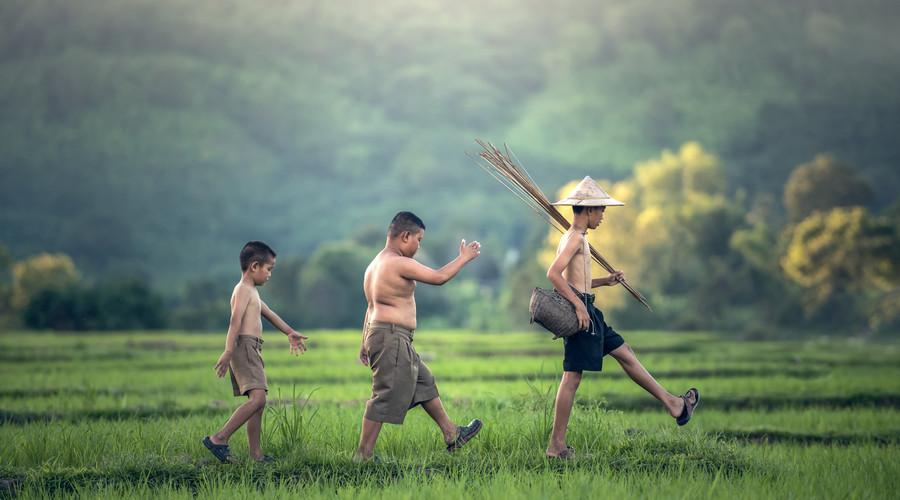 非法占用耕地罪的構成要件是什么