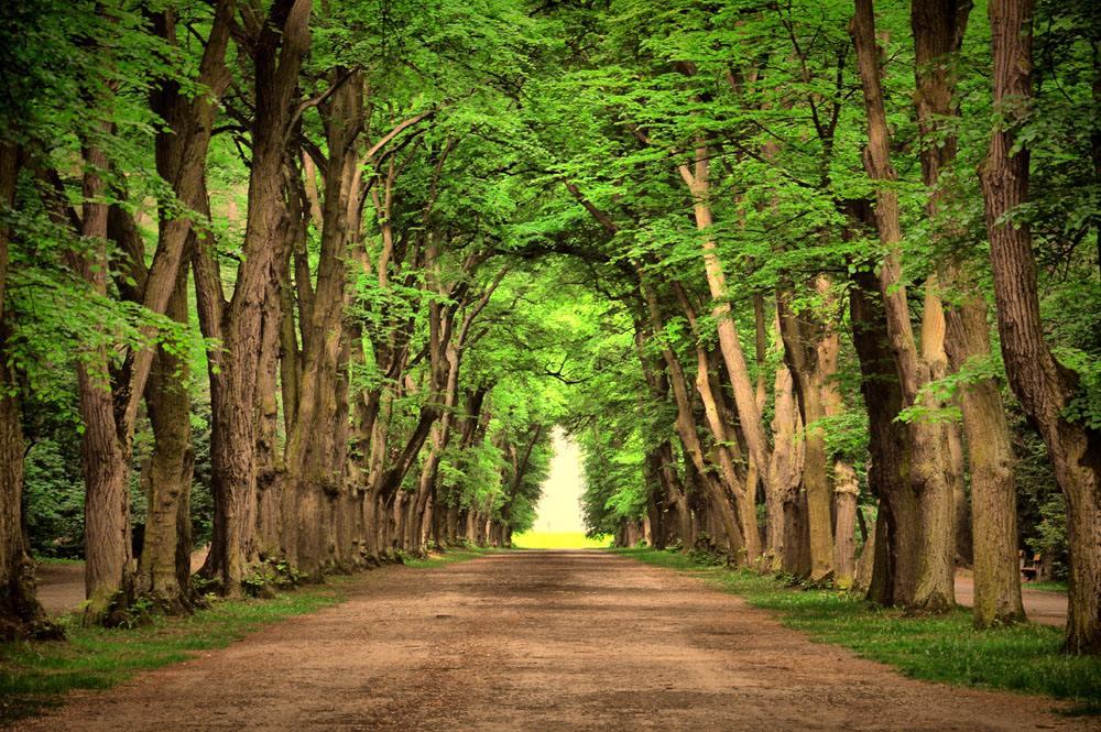 人民法院关于审理破坏森林资源刑事案件具体应用法律若干问题的解释》