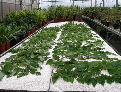 植物新品种保护申请要怎么做