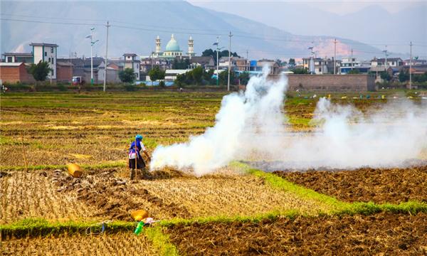 非法占用農用地罪的認定