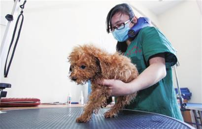 动物医疗纠纷处理程序
