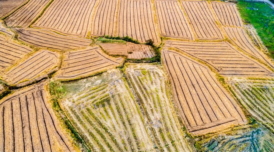 农村土地承包经营权转包合同范本