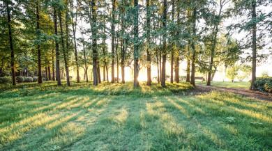 滥伐林木罪单位犯罪的构成要件