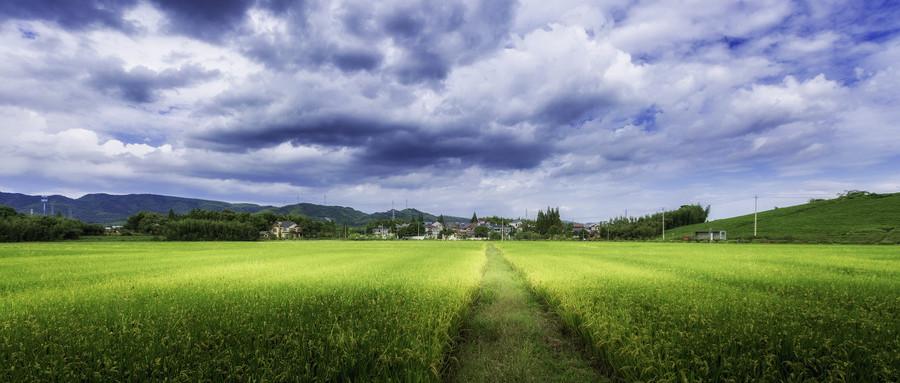 农村土地征用需要什么手续