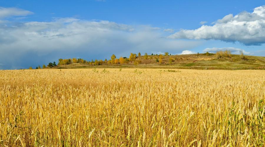 农村土地买卖的具体流程