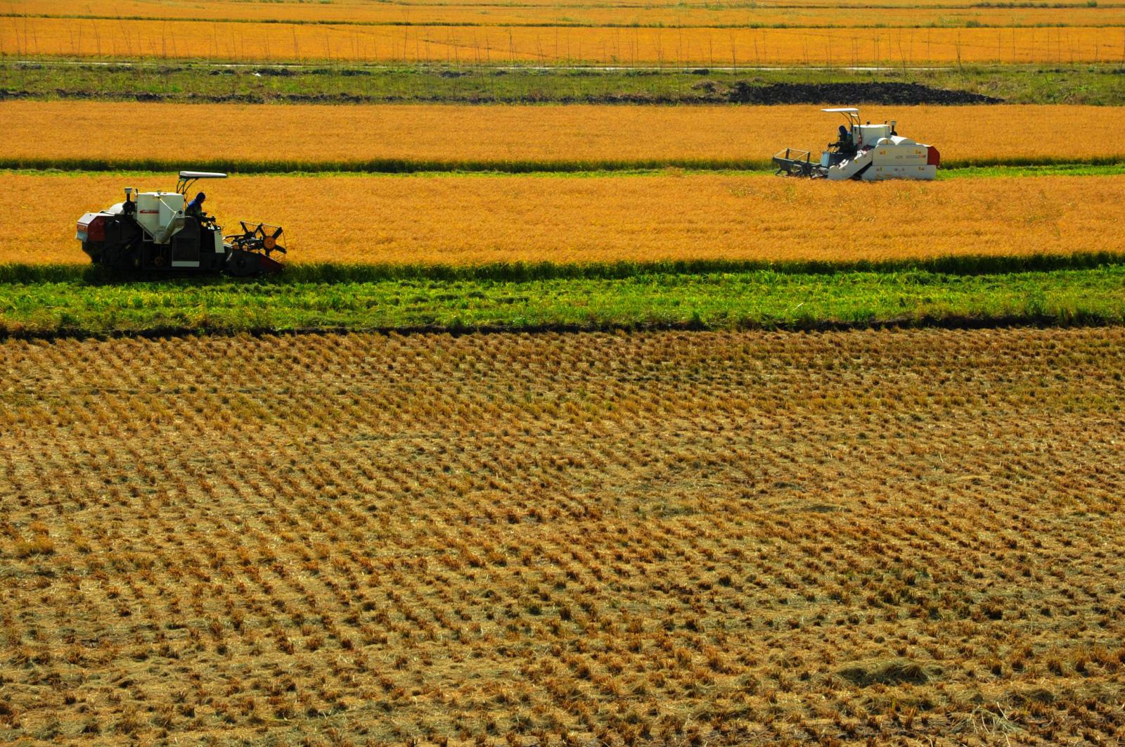 農村土地租賃合同的期限