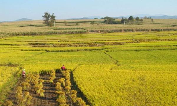 土地承包经营权转包的流程