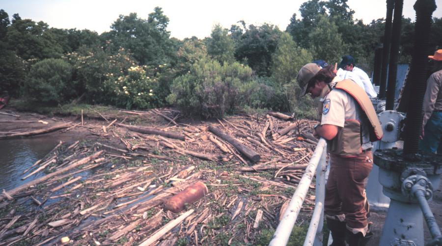 盗伐林木罪立案需要哪些证据
