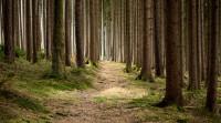 滥伐林木罪的量刑标准是怎样的