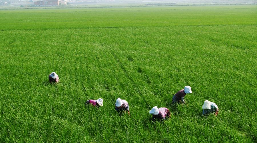 土地被征收后还可以继续种地吗?